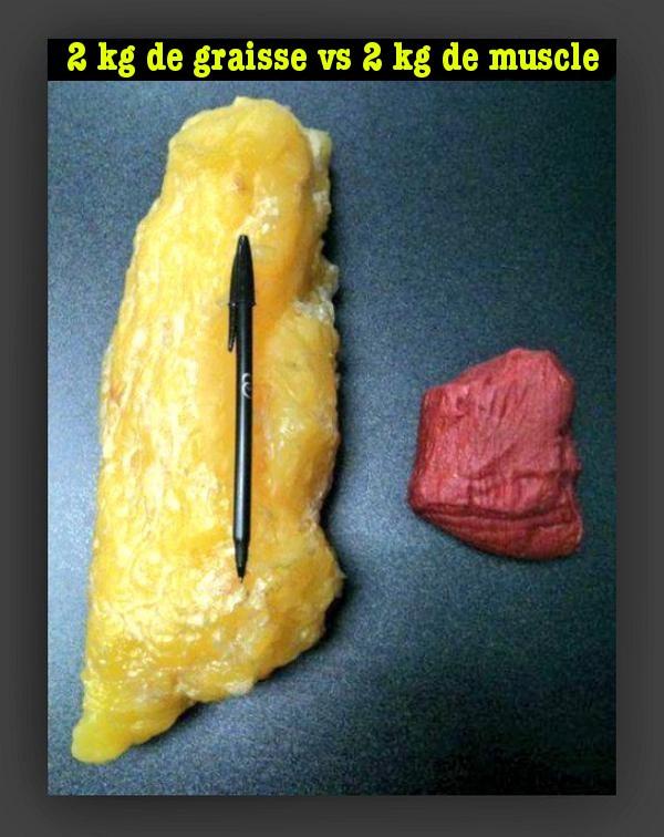 2KG de graisse VS 2KG de muscle