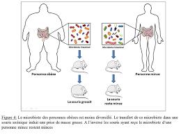 Le microbiote manipule l'appétit